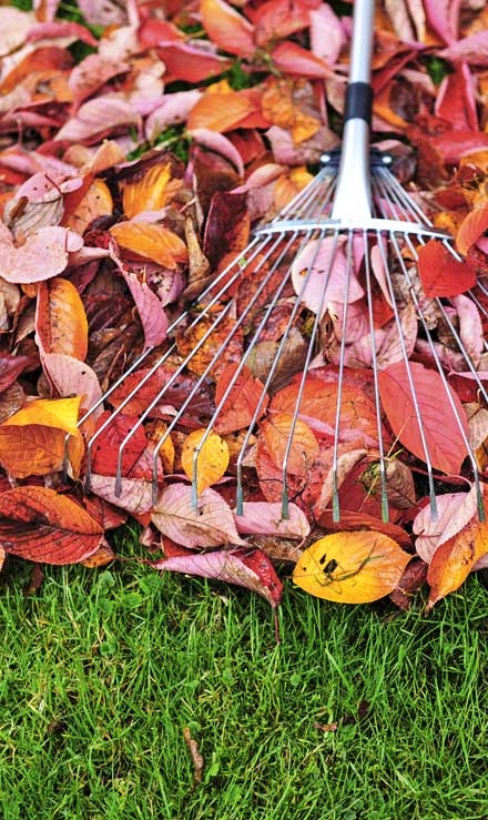 Sterling Lawn & Landscape Fall Clean Up
