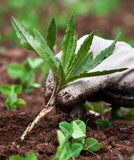 Sterling Lawn & Landscape Weed Control services